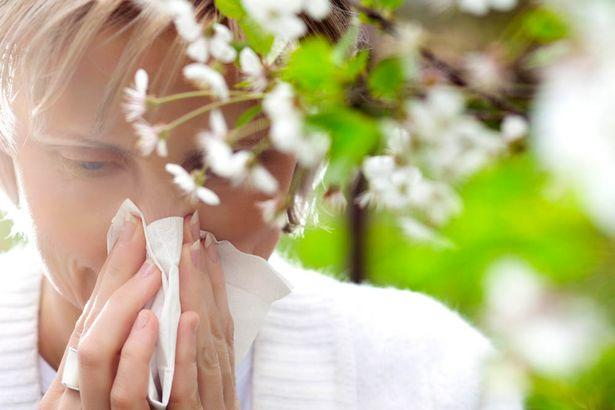 How to stop hayfever and have an allergy-free summer - Irish Mirror ...